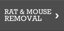 Rat & Mouse Removal